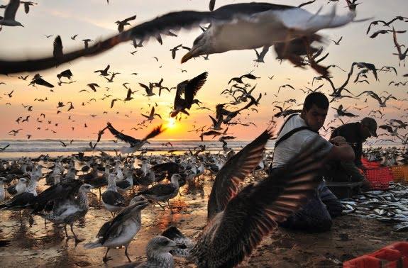 25 Zadivljujućih Fotografija Plaže