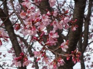 Boje Proleća – Palete Boja od Cveća i Okoline