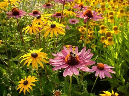 Slike Za Desktop Proljeće Besplatne Pozadine Za Desktop