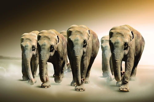 Slike životinja za Desktop u Visokoj Rezoluciji – 320 dpi Wallpapers