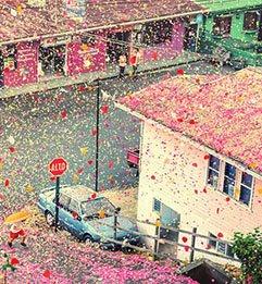 8 Milona Latica Cveća se Spustilo na Selo u Kostariki