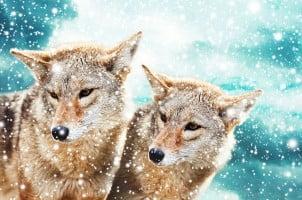 Divlje Životinje – 25 Neverovatnih Fotografija Divljih Životinja koje Ostavljaju bez Daha