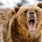 divlje zivotinje - wild animals