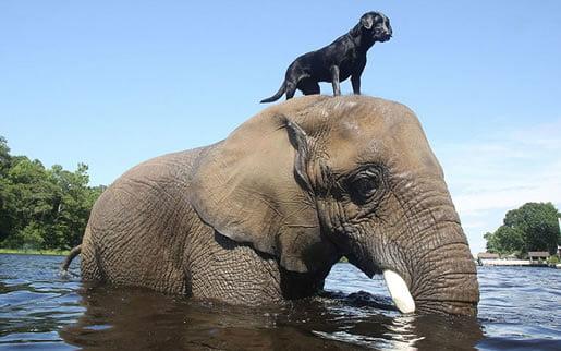 20 fotografija neobičnih životinjskih prijateljstava