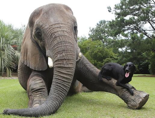neobična-životinjska-prijateljstva-01