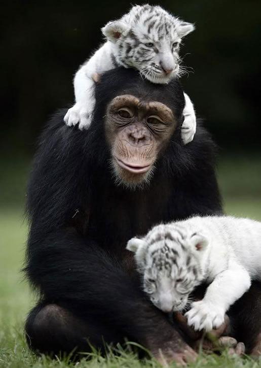 neobična-životinjska-prijateljstva-02