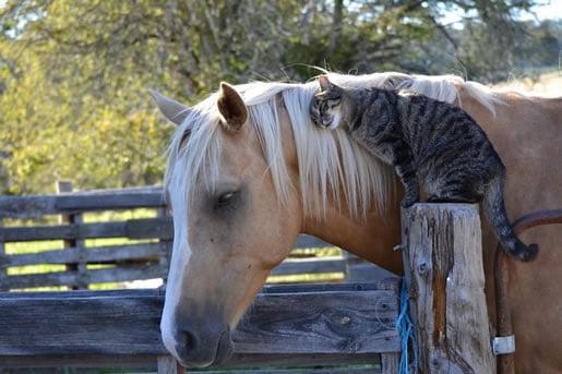 neobična-životinjska-prijateljstva-06