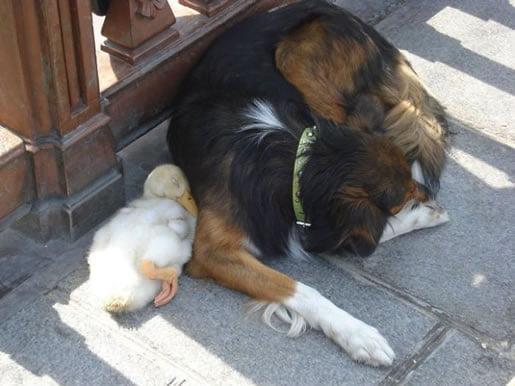 neobična-životinjska-prijateljstva-09