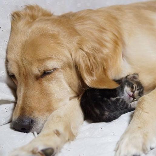 neobična-životinjska-prijateljstva-10