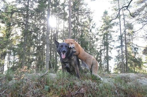 neobična-životinjska-prijateljstva-11