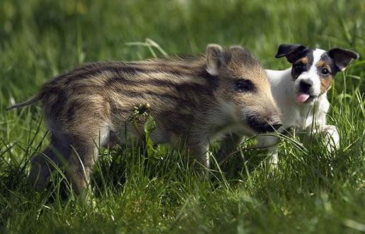 neobična-životinjska-prijateljstva-13
