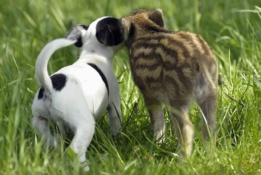neobična-životinjska-prijateljstva-14