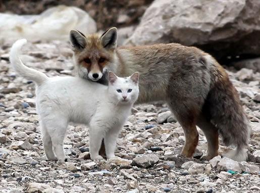 neobična-životinjska-prijateljstva-15