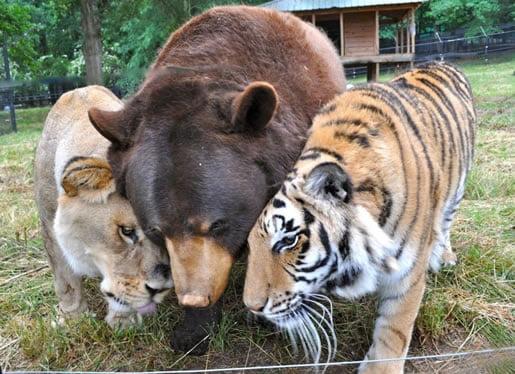 neobična-životinjska-prijateljstva-18