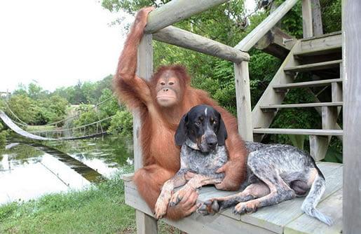 neobična-životinjska-prijateljstva-19