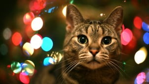Must Have Christmas And New Year HD Wallpapers Pack