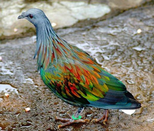 životinje-neobičnih-boja-03