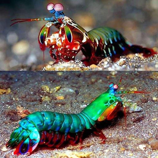 životinje-neobičnih-boja-16