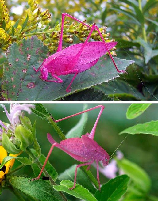 životinje-neobičnih-boja-19