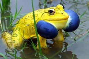 Životinje neobičnih boja