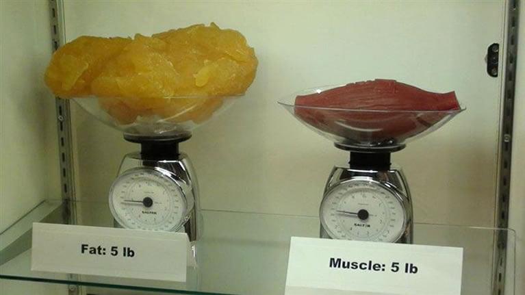 mast-i-mišići