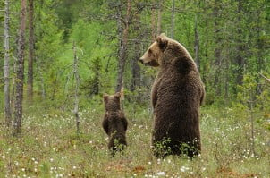 19 Fotografija roditeljstva iz životinjskog carstva