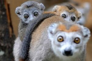 50 Najboljih fotografija prirode