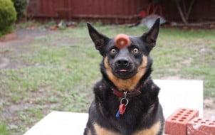 25 Fotografija pasa zabeleženih u pravom trenutku