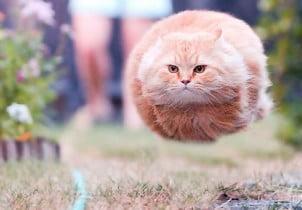 27 fotografija mačaka zabeleženih u pravom trenutku