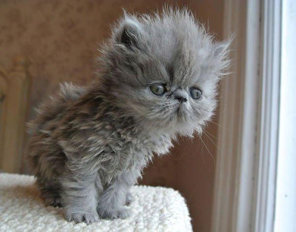 fat-fluffy-cats (10)