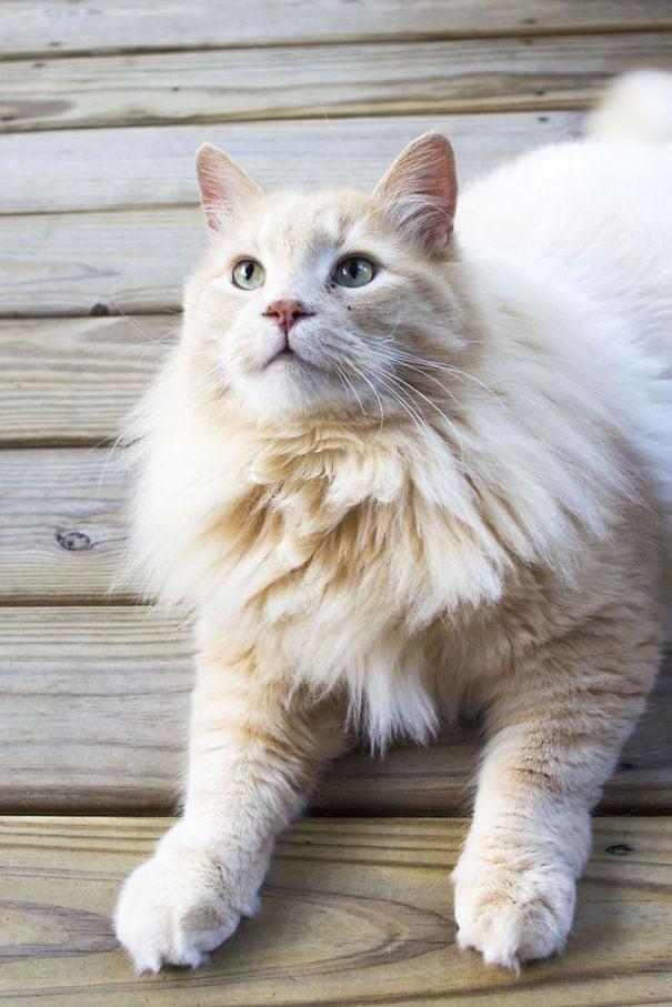 fat-fluffy-cats (11)