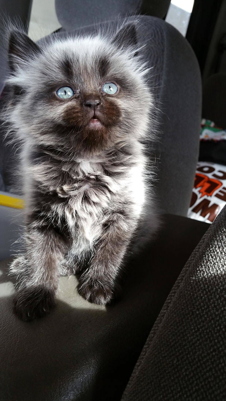 fat-fluffy-cats (14)