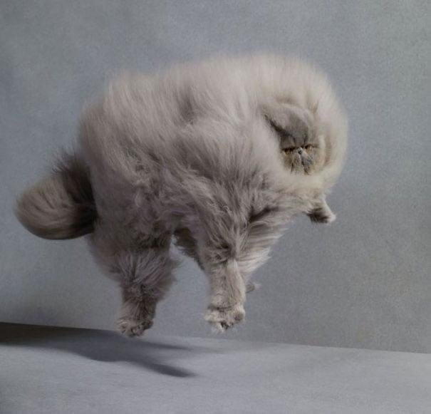 fat-fluffy-cats (15)