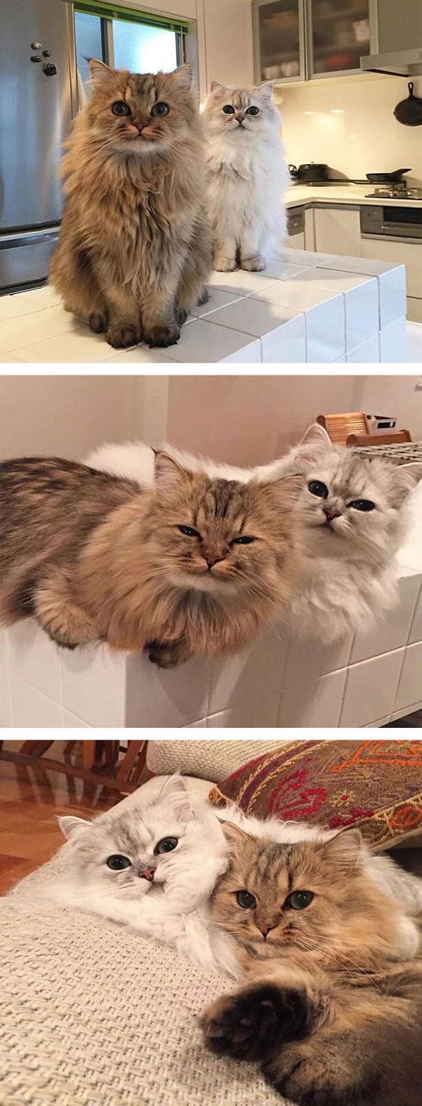 fat-fluffy-cats (16)