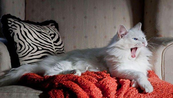 fat-fluffy-cats (20)