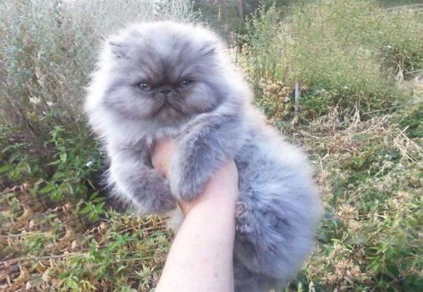 fat-fluffy-cats (21)