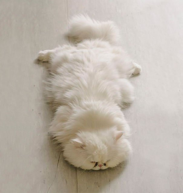 fat-fluffy-cats (23)