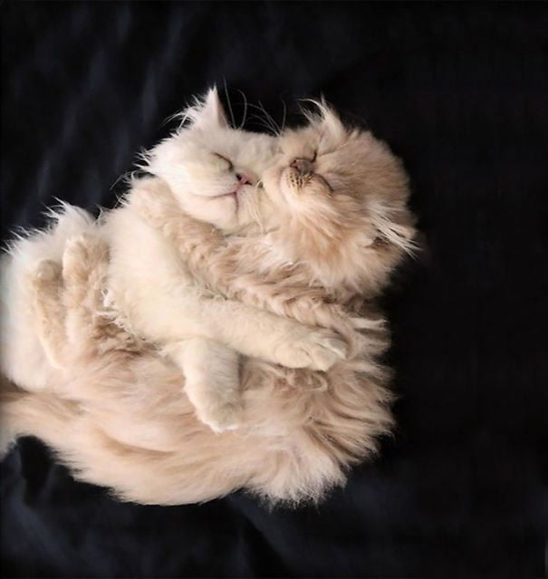 fat-fluffy-cats (24)