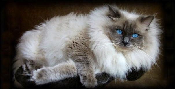fat-fluffy-cats (25)