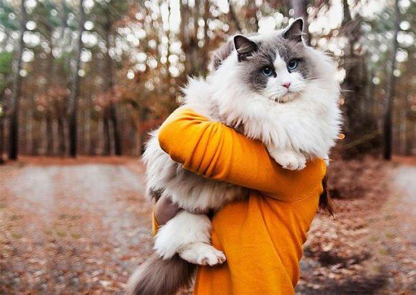 fat-fluffy-cats (27)