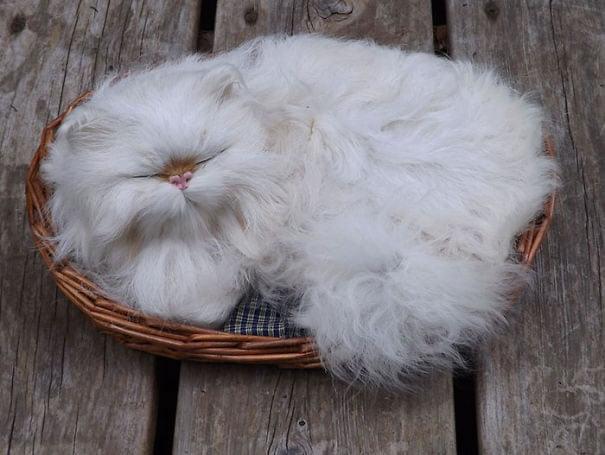 fat-fluffy-cats (28)