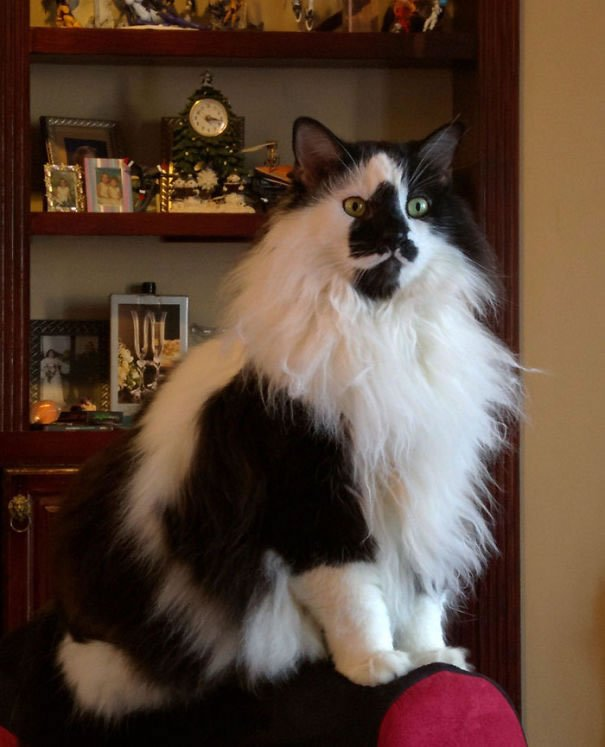 fat-fluffy-cats (37)
