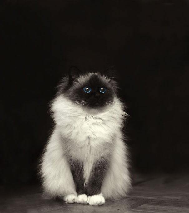 fat-fluffy-cats (38)