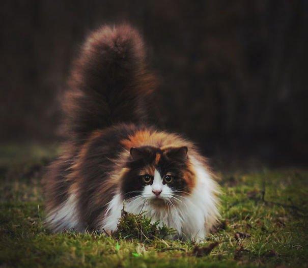 fat-fluffy-cats (39)