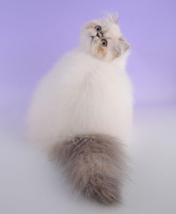 fat-fluffy-cats (4)