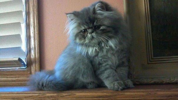 fat-fluffy-cats (40)