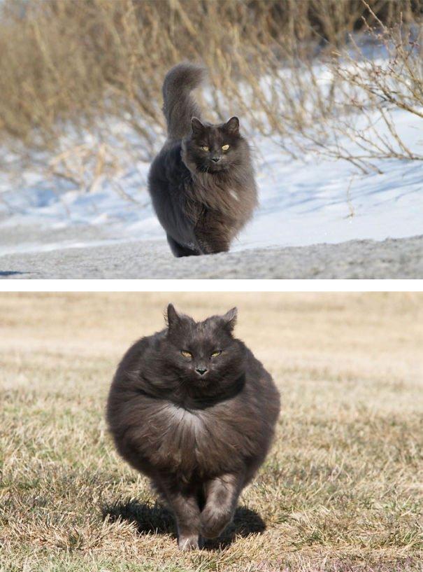 fat-fluffy-cats (41)