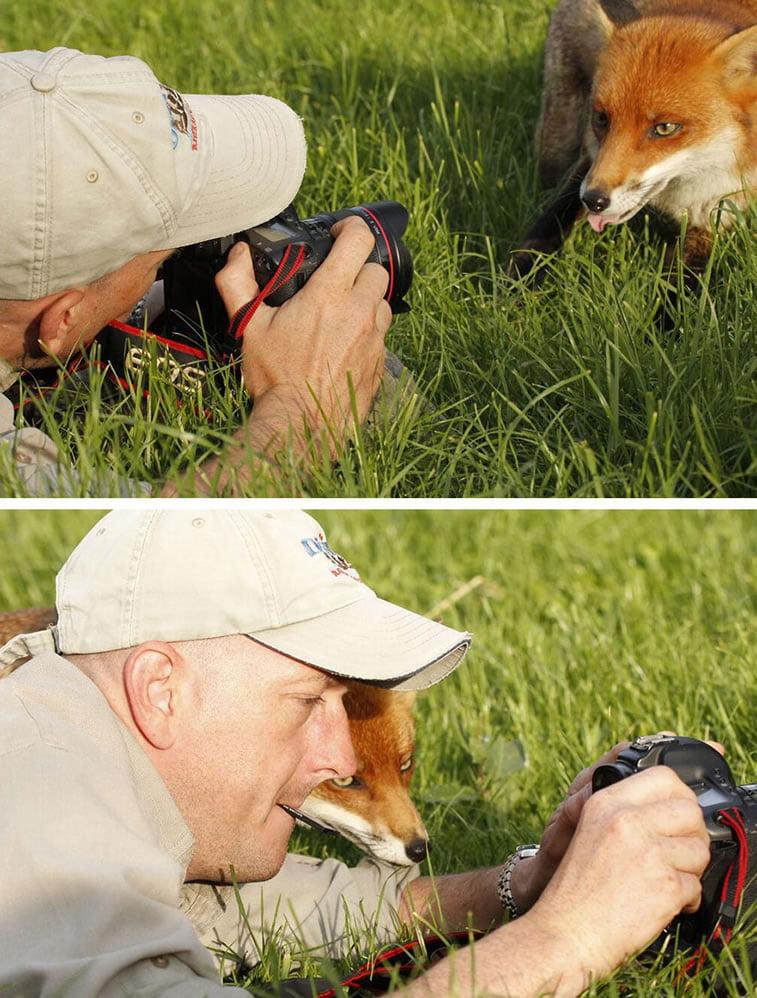 fotografije-zivotinja (14)