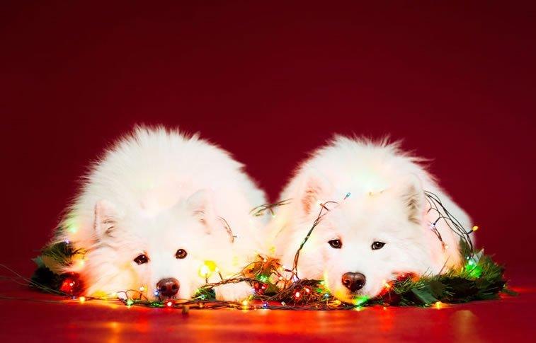 xmas-dogs (10)