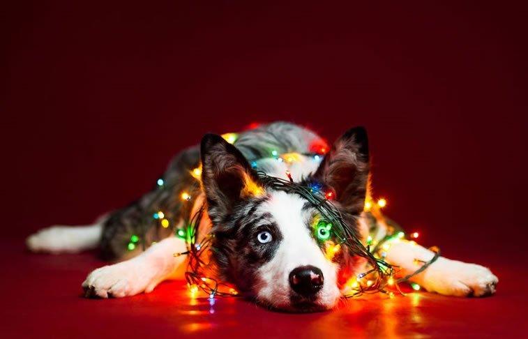 xmas-dogs (2)